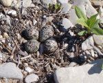 Kildare Eggs